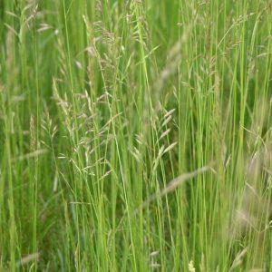 Wild Grass Mixes by Soil Texture