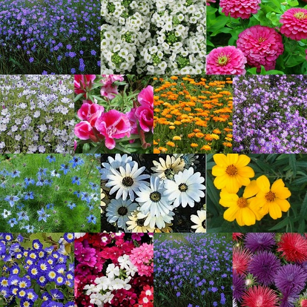 Amenity Flowers