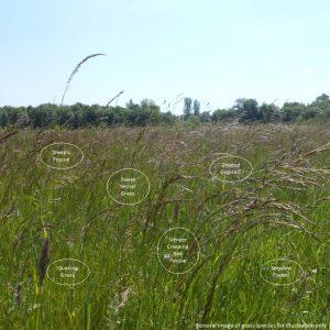 wild grass texture. Wild Grass Texture