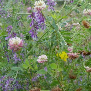 Countryside Stewardship Mixtures
