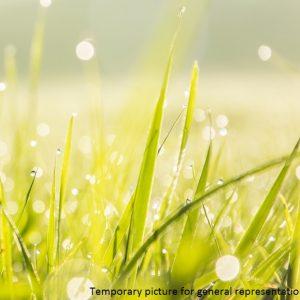 Amenity Grass Areas